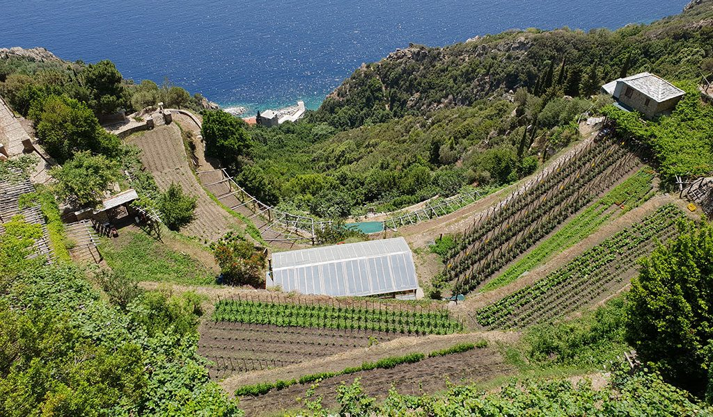 Plantations on Mount Athos